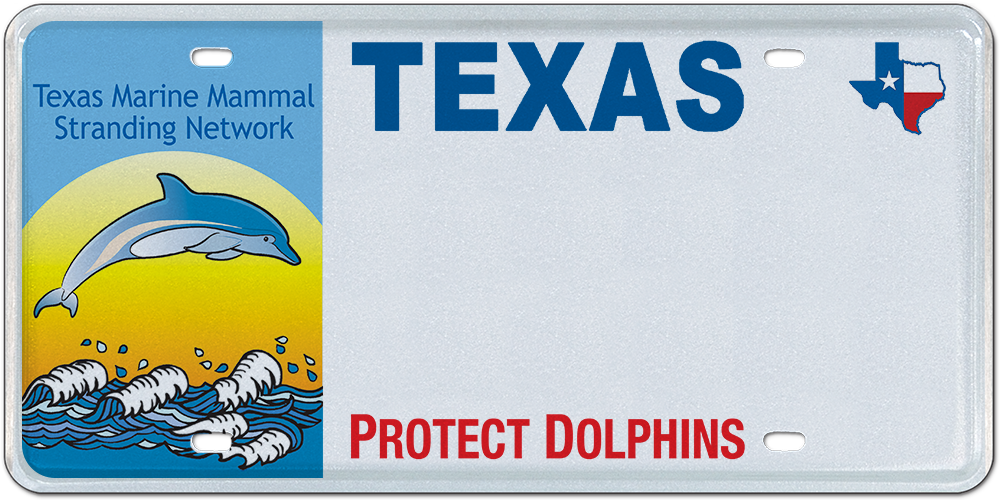 Marine Mammal Recovery