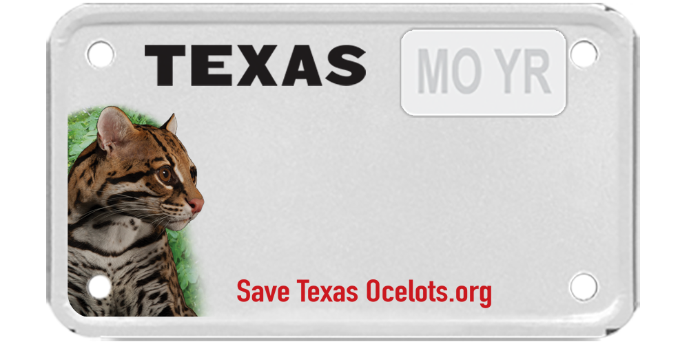 Save Texas Ocelots