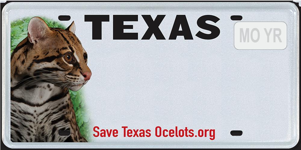 Save Texas Ocelots
